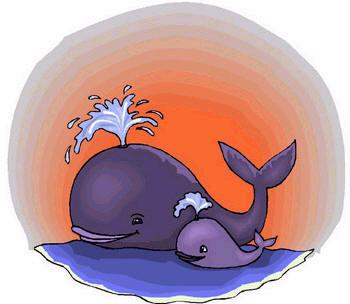 La ballena y el divino niño